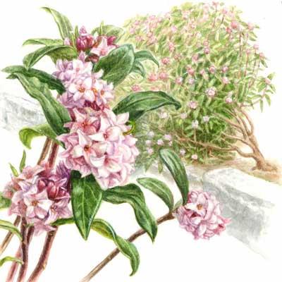 さ行の植物植物図鑑ガーデンエクステリアlixil 新日軽